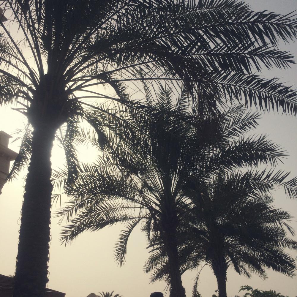 Palm trees, Dubai